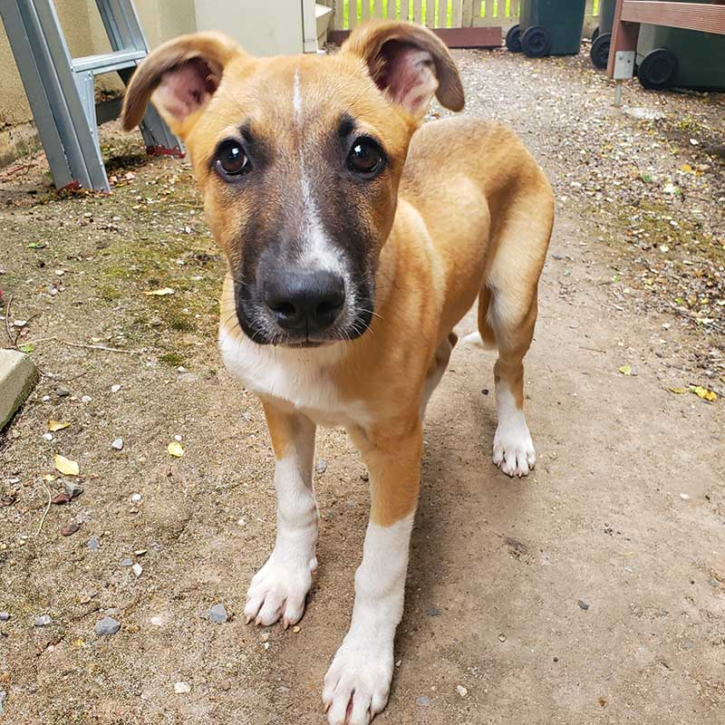 Rocky-4.5-months-old-pup-who-has-been-in-shelters-and-many-different-foster-homes-since-he-was-born.jpg